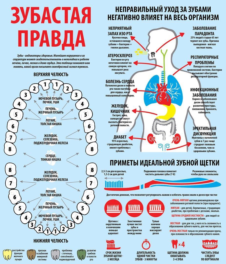 Влияние здоровья зубов на весь организм